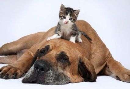 Fotos de Perros y Gatos Juntos  Fotos de Perros