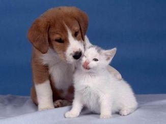 Convivencia entre perros y gatos