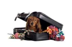 viajar mascota
