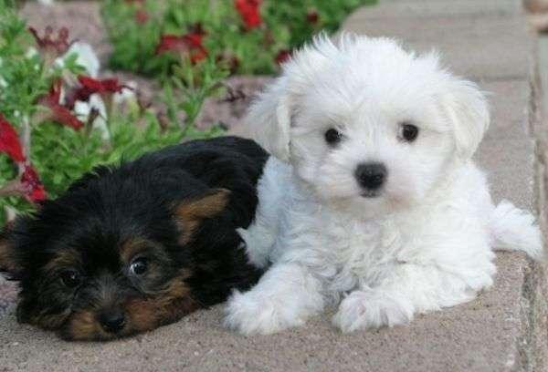 Cachorros1