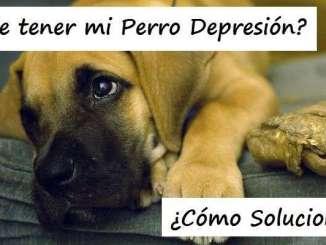 Mi Perro Tiene Depresión ¿Cómo Puedo Solucionarlo?