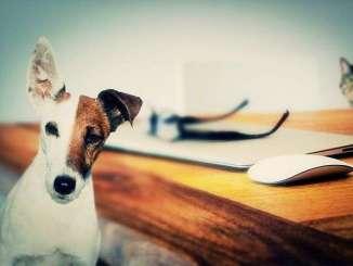 Los Perros Reducen la Soledad Humana
