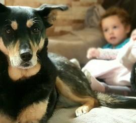 Confinamiento con niños y perros