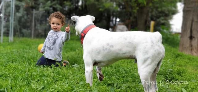 ¿Cómo mejorar el vínculo entre niños y perros?