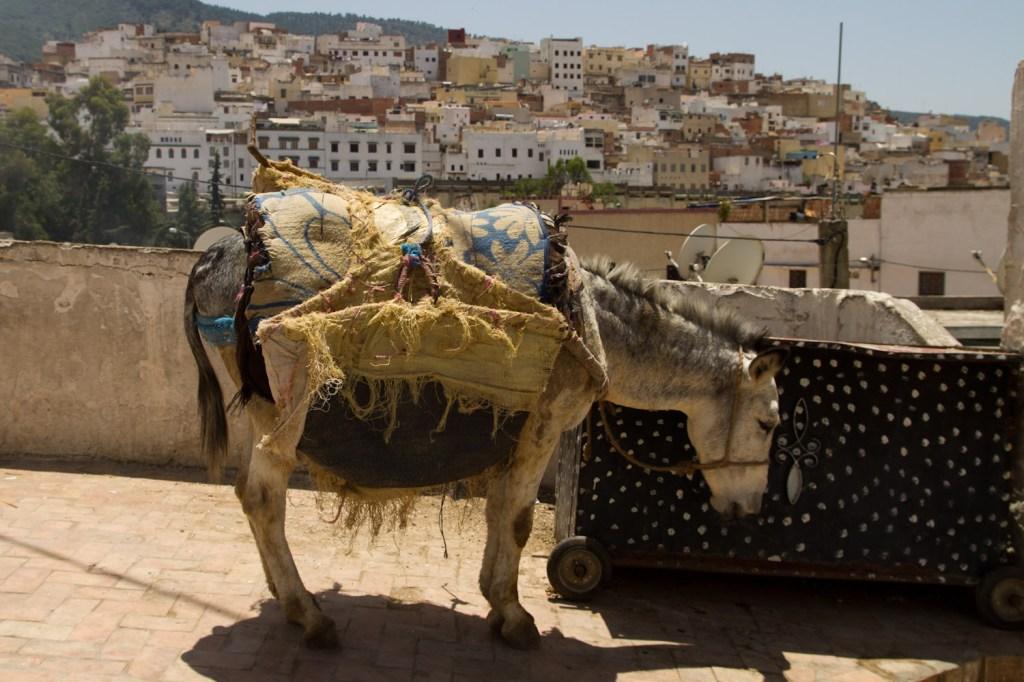 La mayor parte del transporte de carga en Moulay Idriss se hace a lomos de burros