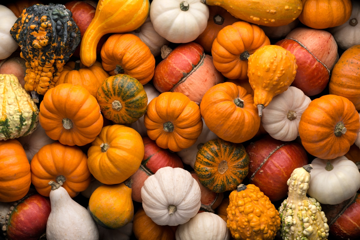 Fall Decorations For A Welcoming Home This Thanksgiving