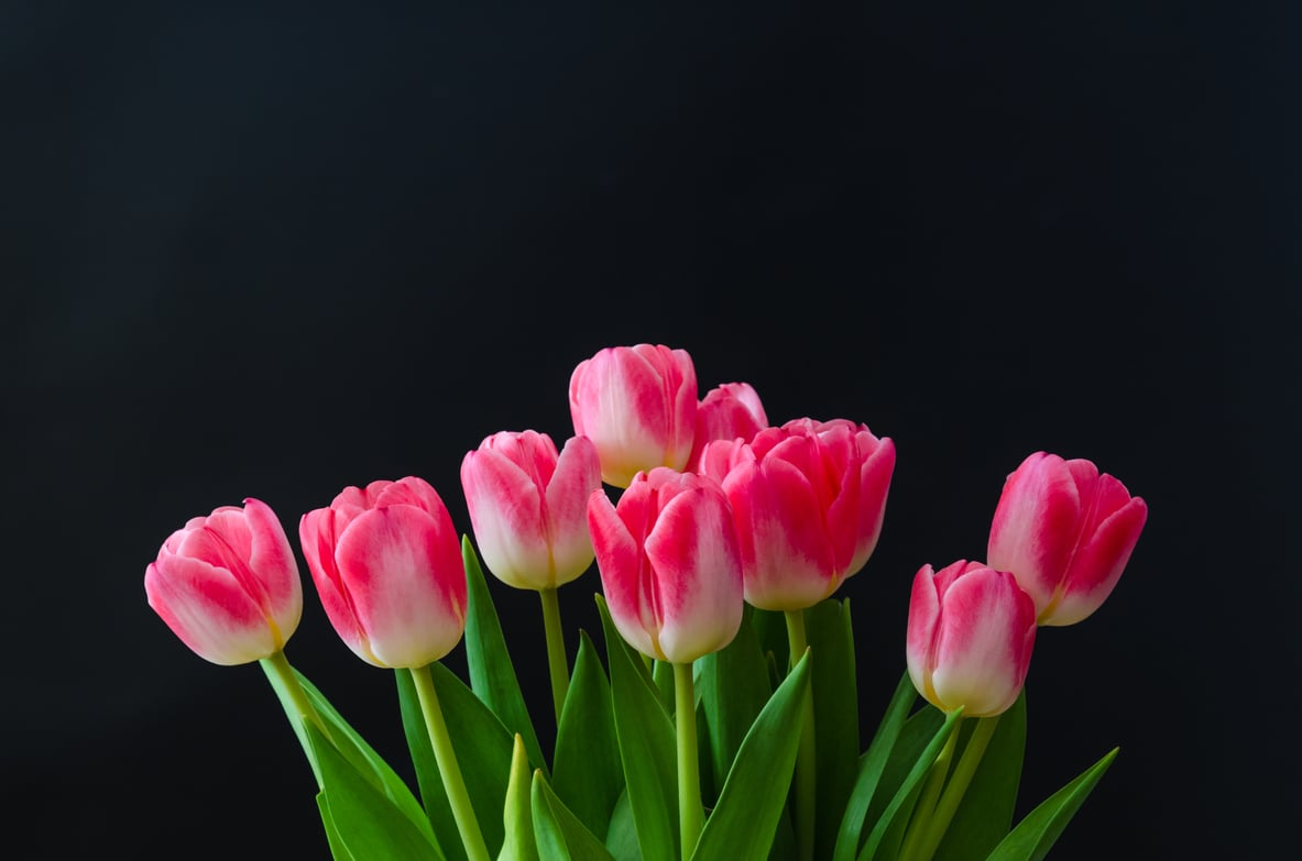 Add Color To Your World With Utah S Best Spring Flowers