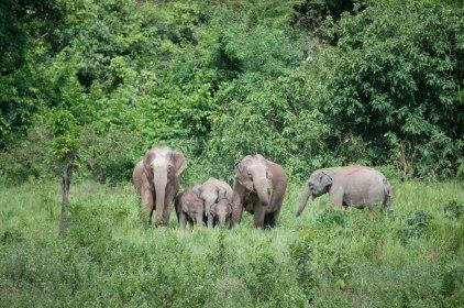 Elephants at Kui Buri National Park
