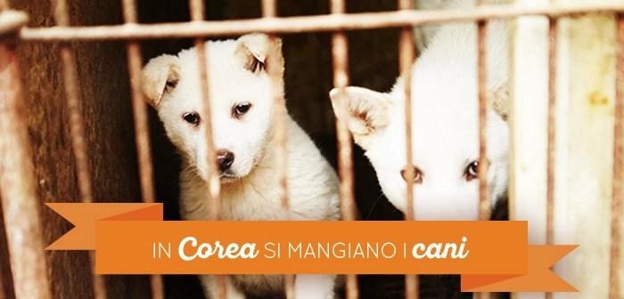 Vero in corea si mangiano i cani persi in corea for I cani youtube
