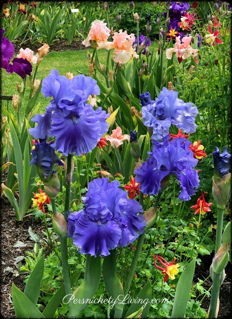 Schreiners Iris Gardens