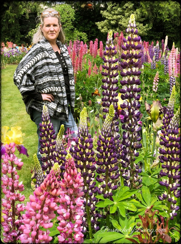Tall Lupines Short Me