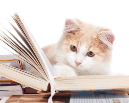 Cat-content Inhalte von Facebook-Newsfeeds werden von Katzen dominiert