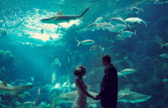 весілля в Туреччині