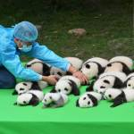 Professional Panda Cuddler as the World's Best Job for $32,000 per Year