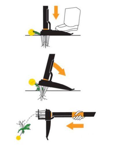 Eliminar las malas hierbas del césped
