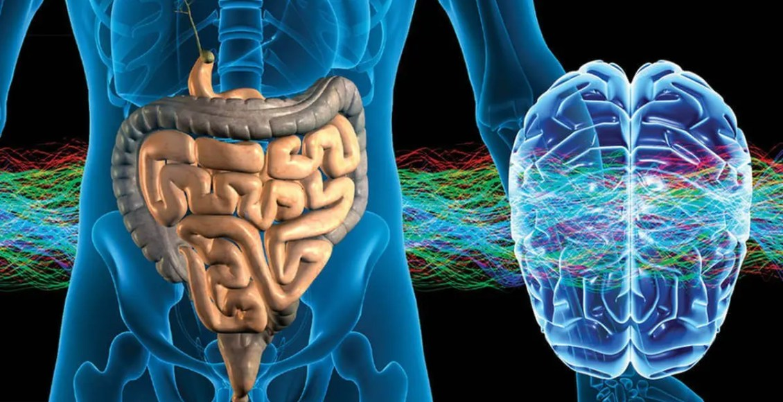 Image of the digestive system and brain affected by stress.
