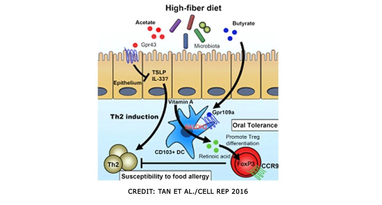 ácidos grasos post-dietéticos-fibra-cadena-corta-y-vitamina-A
