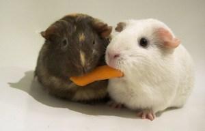sharing-fuzzies