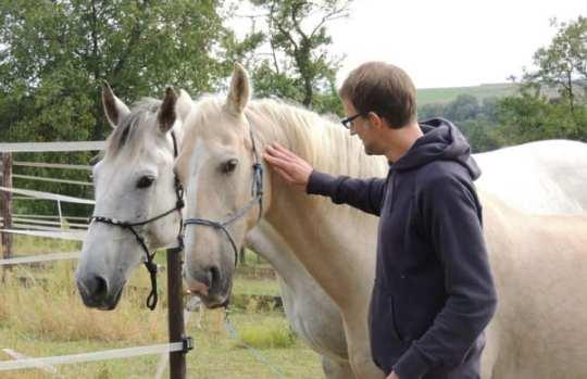 Führen mit Pferd - Kerry und Silverado fassen Zutrauen. Oder umgekehrt :-)