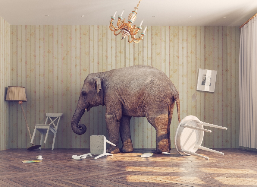 "What worries keep seniors up at night? What ""elephants in the room"" remain unacknowledged?"