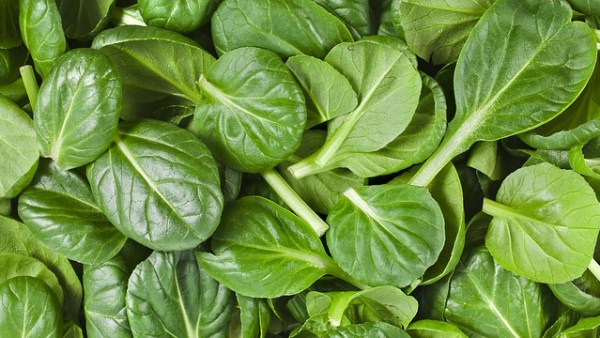 Roerbakgerecht met spinazie en paneer
