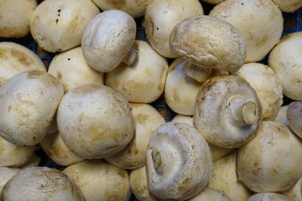 Met kaas gevulde champignons