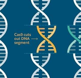 CRISPR, el copiar y pegar de los transhumanistas millonarios