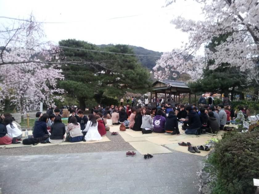 Hanami domenicale
