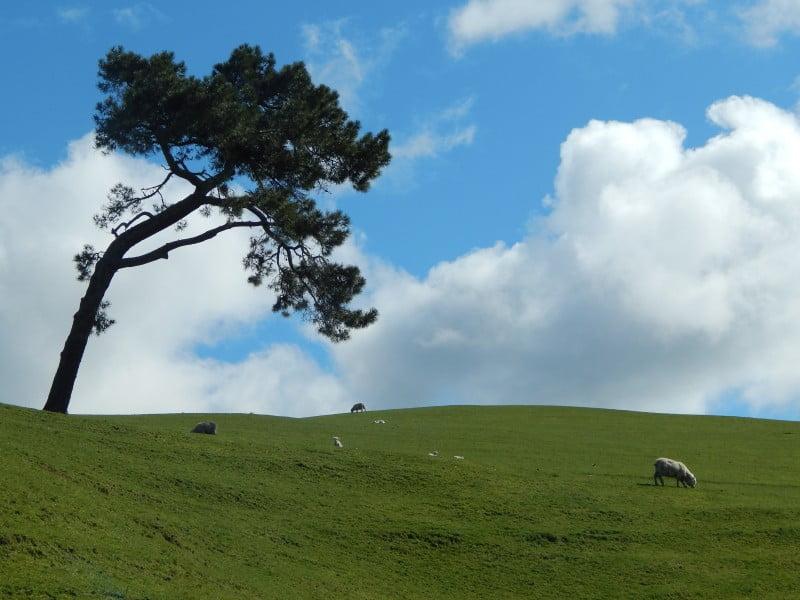 Nuova Zelanda a settembre: nei pressi di Hobbiton