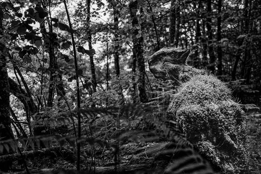 Dans la forêt, personne ne vous entendra crier