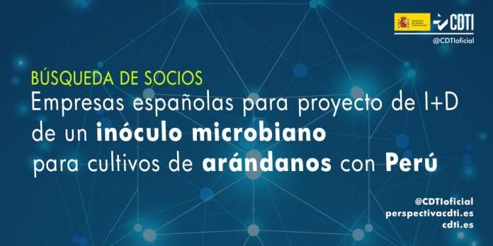 busqueda de socios inóculo microbiano cultivo arándanos con Perú