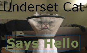 underset cat