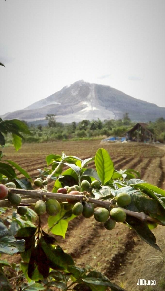 Gunung Sinabung dilihat dari Desa Gung Pinto