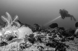 Steve diving near the Fish Trap Carsaig Quay Mull
