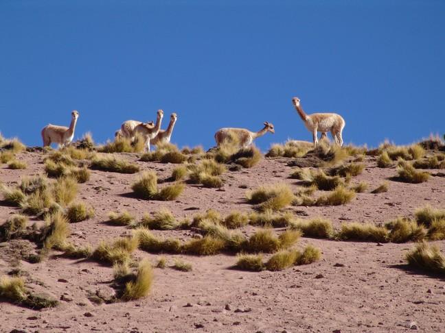 DESERT ATACAMA CHILE