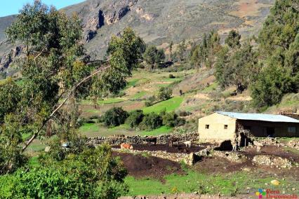 Vista de un rebaño al ingresar a La Merced.