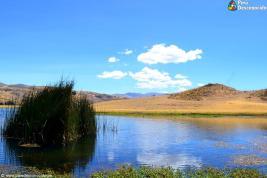 Hermosa vista de La totora que adorna Wilcacocha