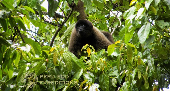 Manu Amazon Adventure (Manu Biosphere Reserve) - Peru Eco Expeditions