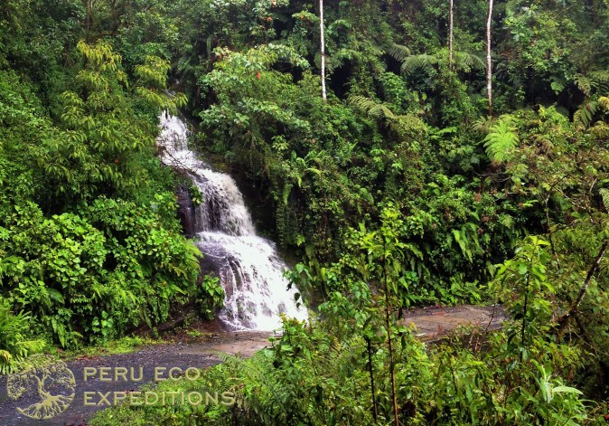 Tres Cruces Amazon Trek (Manu Biosphere Reserve) - Peru Eco Expeditions