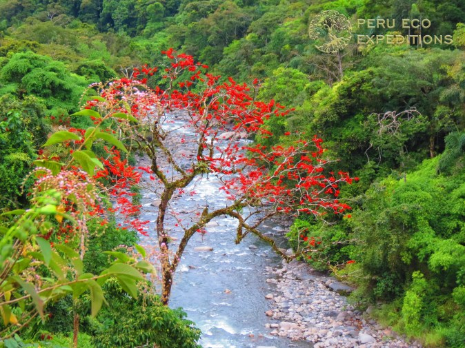 Hike & Bike Amazon Cloud Forest (Manu National Park & Biosphere Reserve) - Peru Eco Expeditions