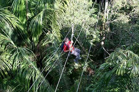 Canopy Zipline Experience
