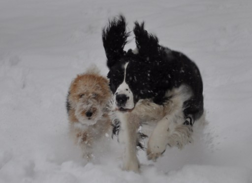 Cella and Bailey in the snow