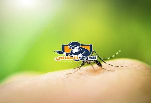 شركة مكافحة الحشرات بعنيزة  شركة مكافحة الحشرات بعنيزة شركة مكافحة الحشرات بعنيزة 0555260478 mosquito bite prevention