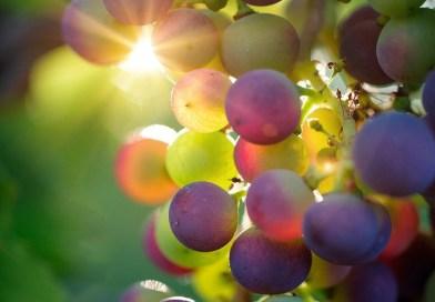 Buah-buahan (1)