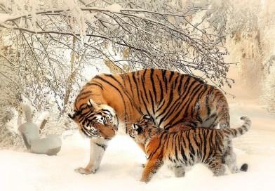 Hewan-hewan (4)