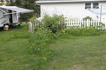 God In My Compost   —  Third Installment– Finding God in My Garden