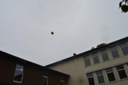 9 - Noch fliegen sie ...