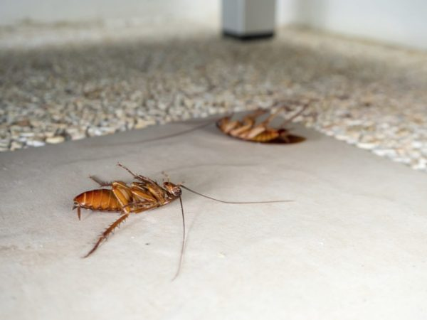 Cockroach control in food industry