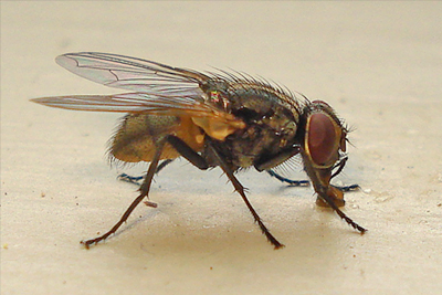Fly Control Treatment