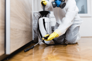 All You Need To Know About Pest Control